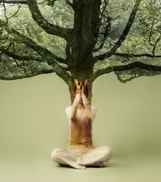 Tree sprouting from woman in yoga position (Digital Composite)