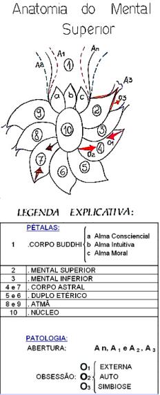 anatomia do mental superior