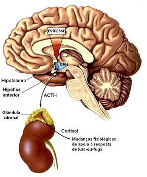 pineal_clip_image011 (1)