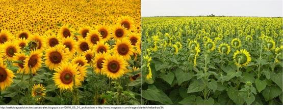 Resultado de imagem para energia Qi das plantas